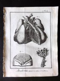 Diderot 1780's Antique Medical Print. Anatomie 16 Anatomy